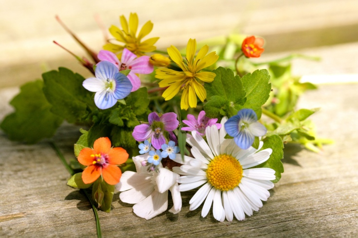 Tiny_flowers_by_Cecile_Vazquez_CCBY_NC_ND_2.0